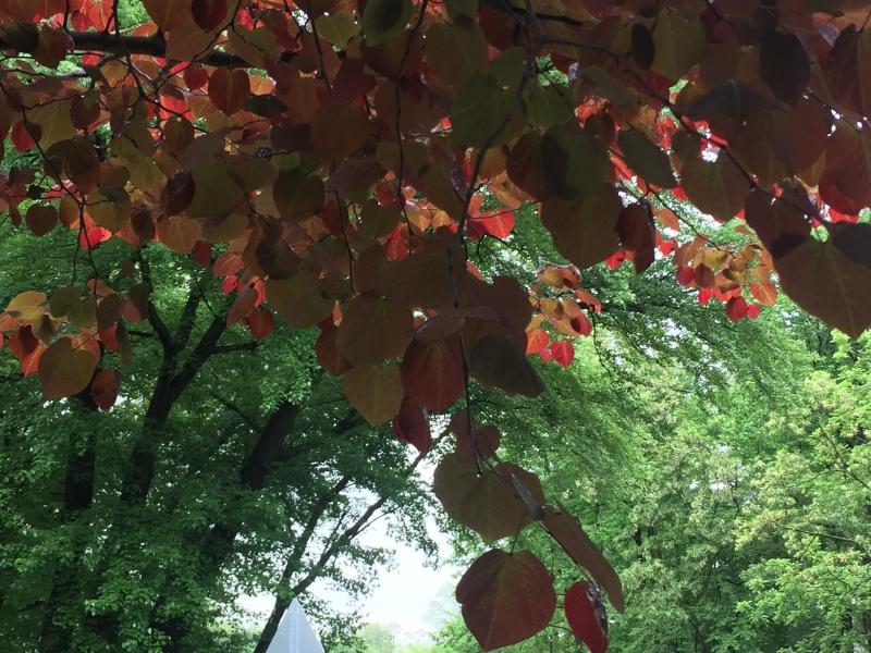 watchwatertree